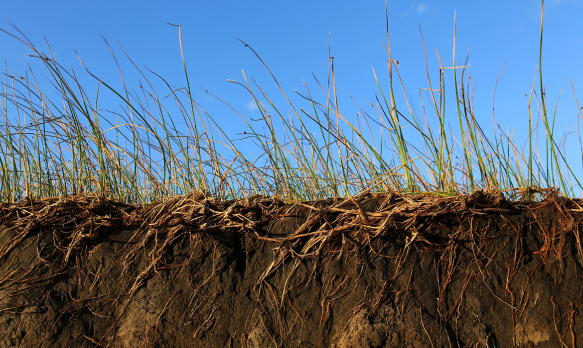 What is soil erosion and how can turf help prevent it?